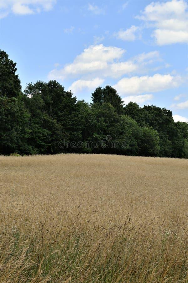 Das allgemeine Feld im Sommer, Stadt von Groton, Middlesex County, Massachusetts, Vereinigte Staaten stockbild