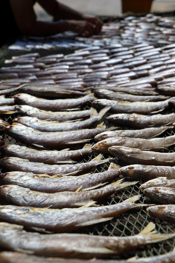 Das Arbeiten an dem Trocknen von salzigem Ozean fischen auf Fischnetzgestell unter starkem lizenzfreie stockbilder