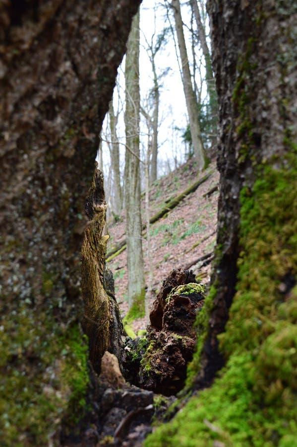 Das Auge der Natur stockfotografie