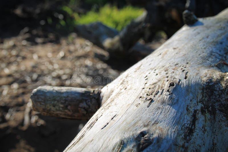 Das ausführliche Foto der Baumrinde stockfotografie