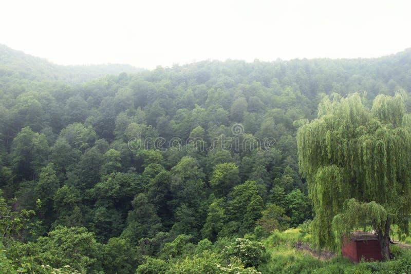 Das bewaldete Tal der Ijevan-Strecke Nebel über den Bergen Ansicht vom Kloster Haghartsin Große Weide armenien stockfotografie
