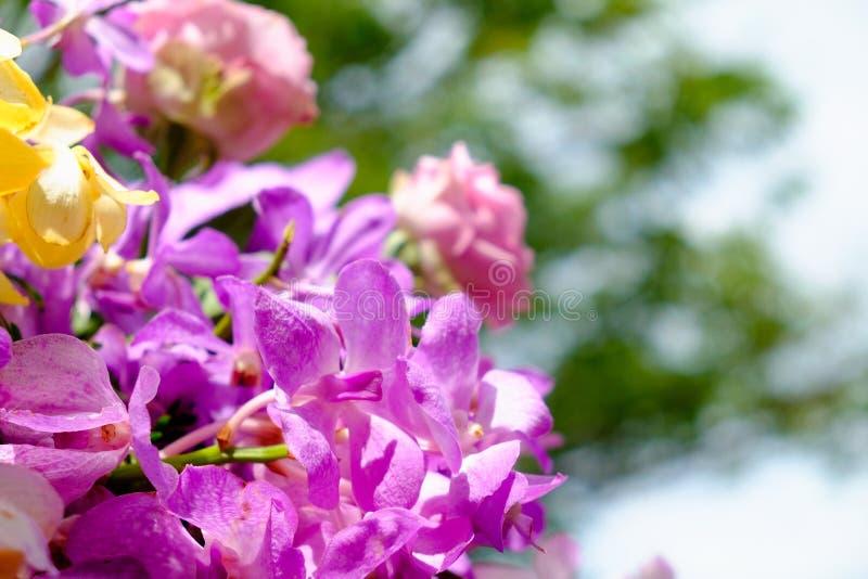 Das Bild des bunten Orchideenblumenblumenstraußes mit Unschärfehintergrund stockfotos