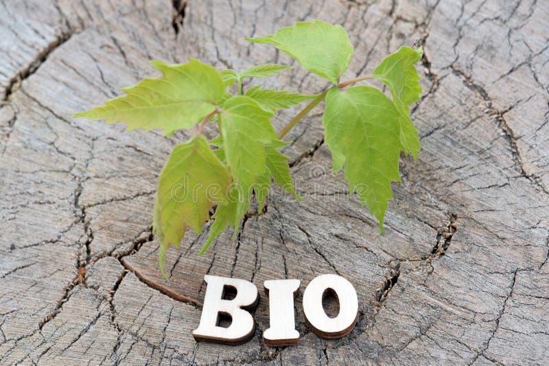 Das BIO Wort wird von den hölzernen Buchstaben auf einem alten Stumpf neben einem jungen grünen Sprössling gemacht Das Konzept de stockbild