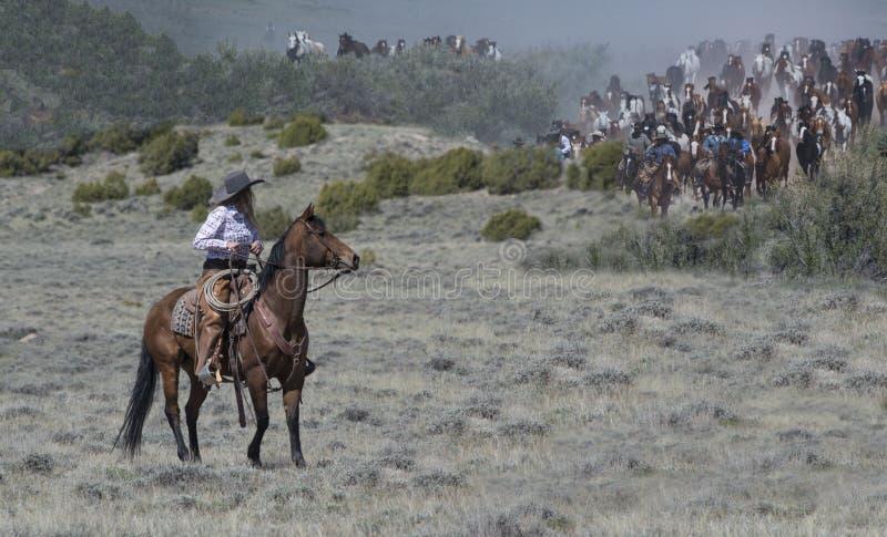 Das Cowgirl, das eine Braune reitet, ist bereit, Bewegungshunderten von schnell nähernden Pferden auf jährliche Sombrero-Ranch-gr lizenzfreie stockbilder