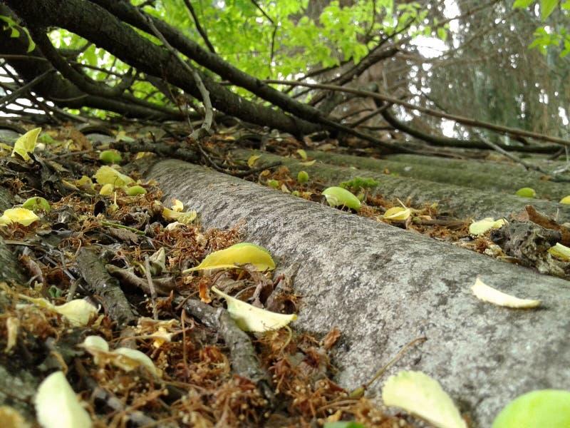 Das Dach voll von Blättern stockfotos