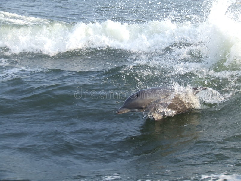 Das Delphinspringen stockfotos
