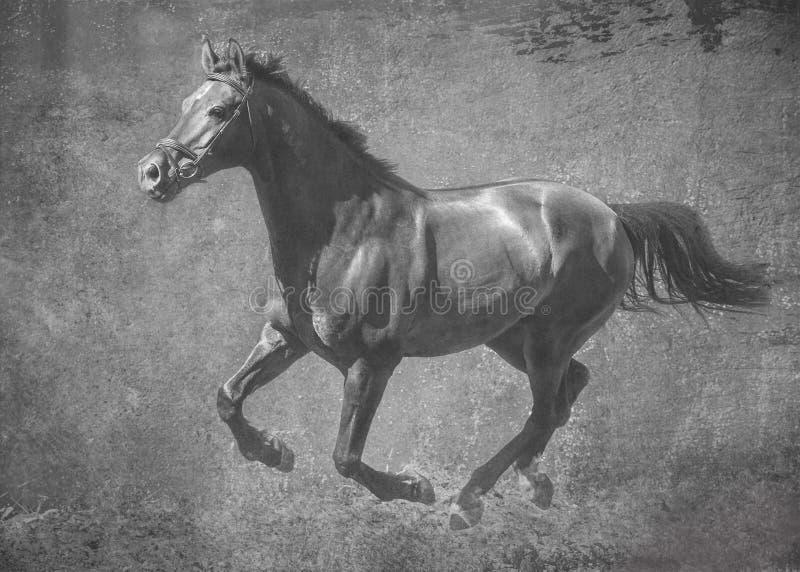 Das dunkle Sportpferd lässt Galopp auf Freiheit laufen r lizenzfreie stockfotografie