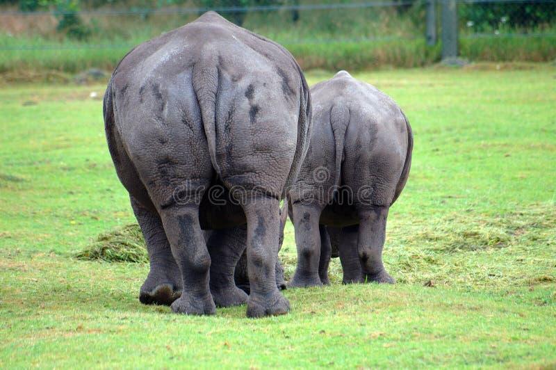 Das Ende des Nashorns stockbild