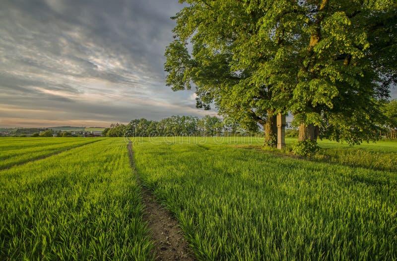 Das Ende des Tages auf einem Maisfeld lizenzfreie stockfotos