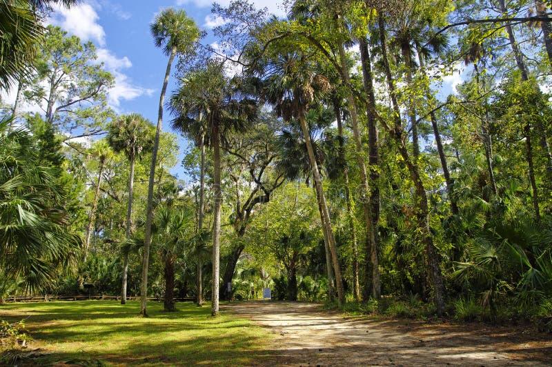 Das Erholungsgebiet im Ocala-staatlichen Wald gelegen in Juniper Springs Florida lizenzfreies stockfoto