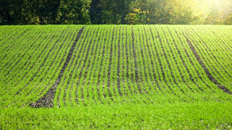 Das Feld des grünen Landwirts, vorbereitet während der folgenden Jahreszeit lizenzfreies stockfoto