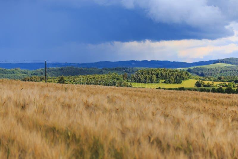 Das Feld nach dem Regen lizenzfreie stockfotos
