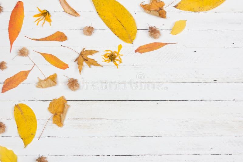 Das Feld, das vom Herbst gemacht wurde, trocknete gelbe Blätter auf weißem hölzernem Hintergrund Flache Lage, Draufsicht, Kopienr lizenzfreies stockfoto