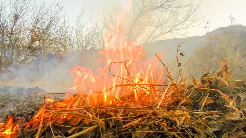 Das Feuer brennt sichtbare Asche und Rauch der trockenen Blätter Herbstreinigung lizenzfreie stockbilder
