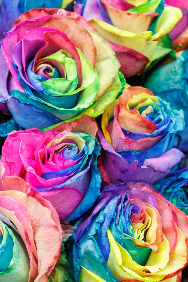 Das flores coloridas das rosas da pintura da aquarela fundo abstrato imagens de stock royalty free