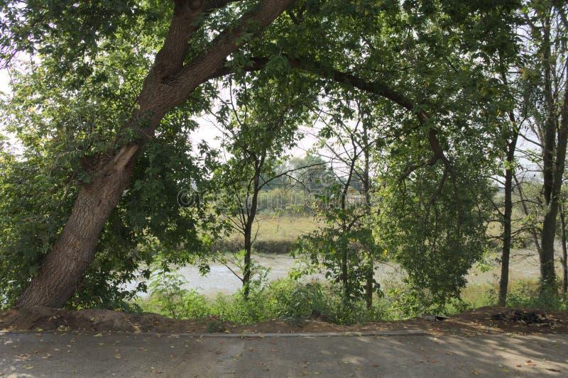 Das Flussufer lizenzfreies stockbild