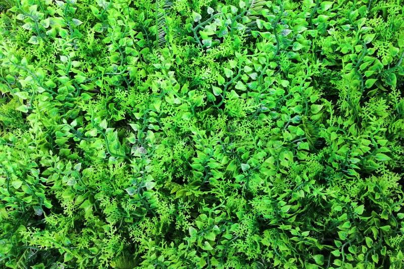 Das geformte Herz verlässt dekorativen Grünpflanzehintergrund stockfoto