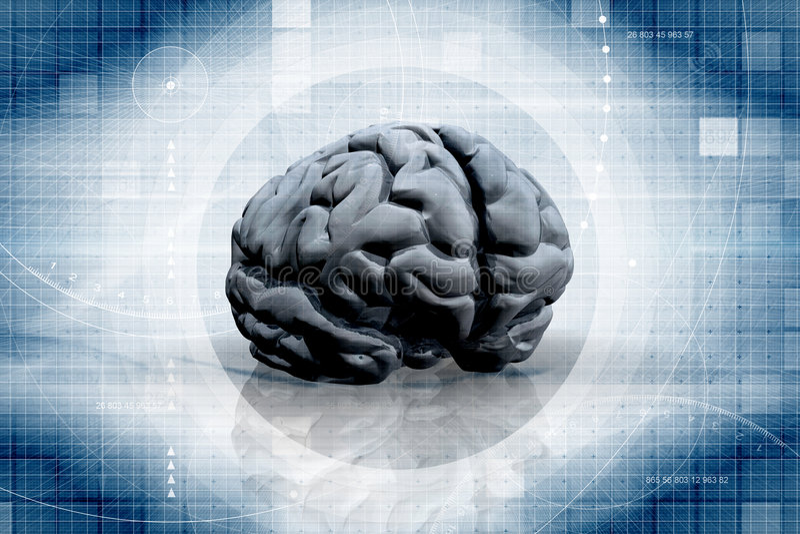 Das Gehirn vektor abbildung