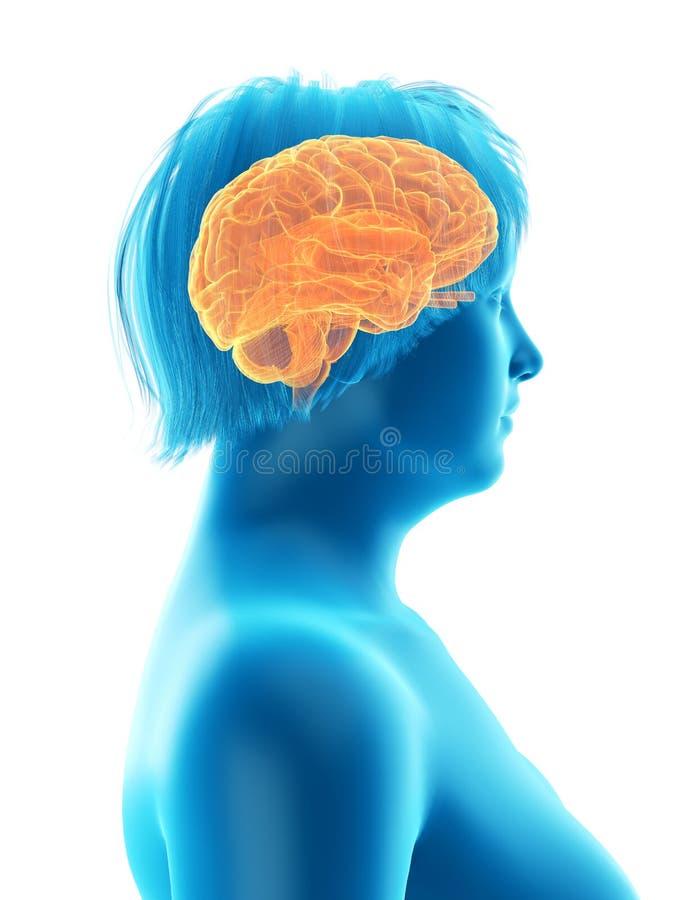 das Gehirn einer beleibten Frau stock abbildung