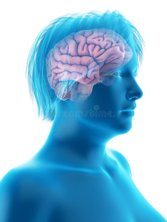 das Gehirn einer beleibten Frau vektor abbildung