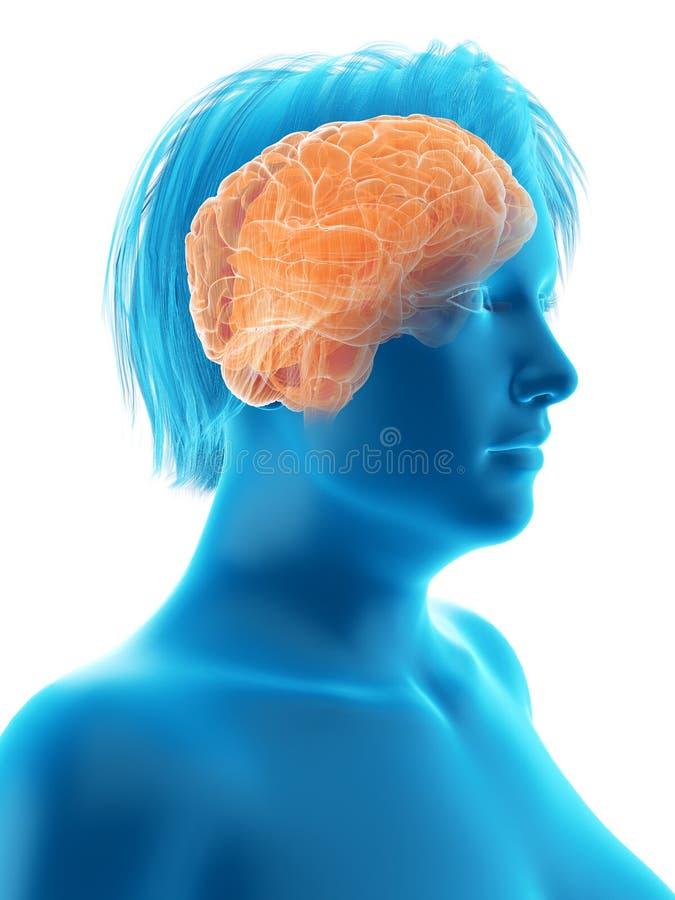 das Gehirn einer beleibten Frau lizenzfreie abbildung