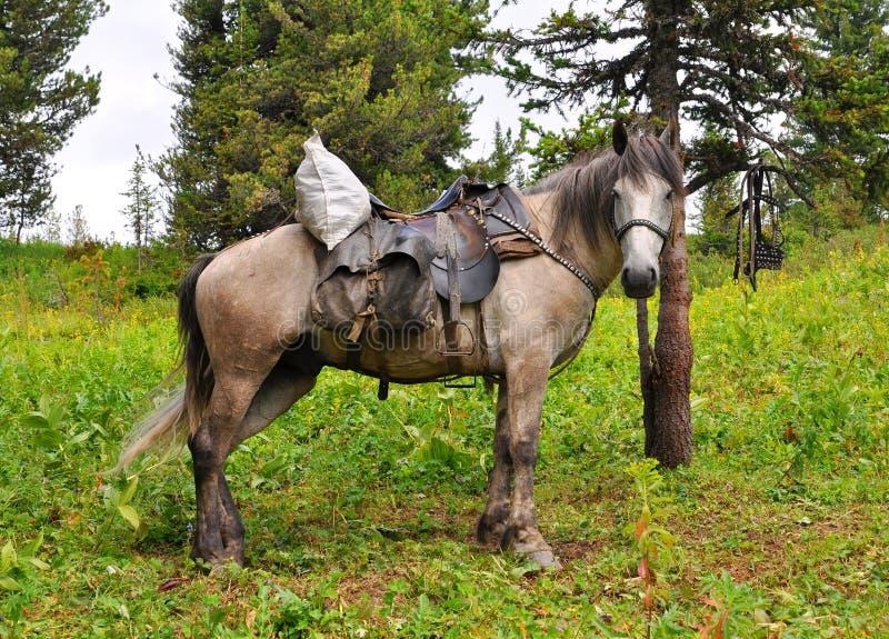 Das gerittene heraus Pferd lizenzfreie stockfotografie