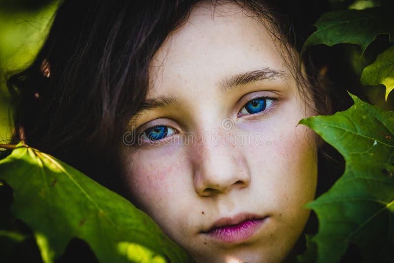 das Gesicht eines recht jugendlich Mädchens unter Ahornblättern, Nahaufnahme stockfotografie