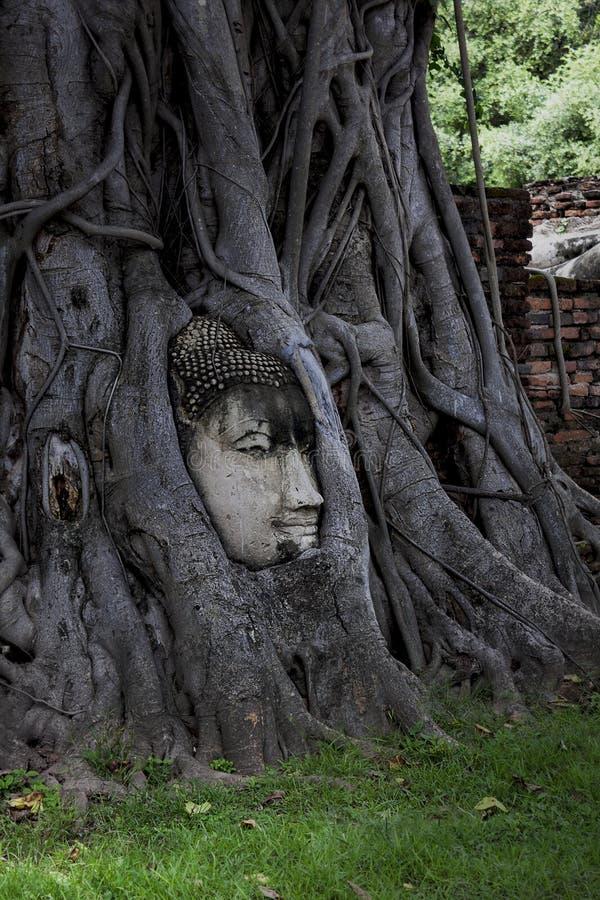 Das Gesicht von Buddha-Statue stockfotografie