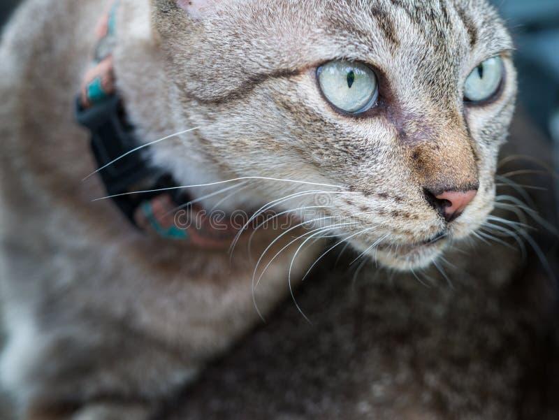 Das Gesicht von Tabby Cat lizenzfreies stockfoto