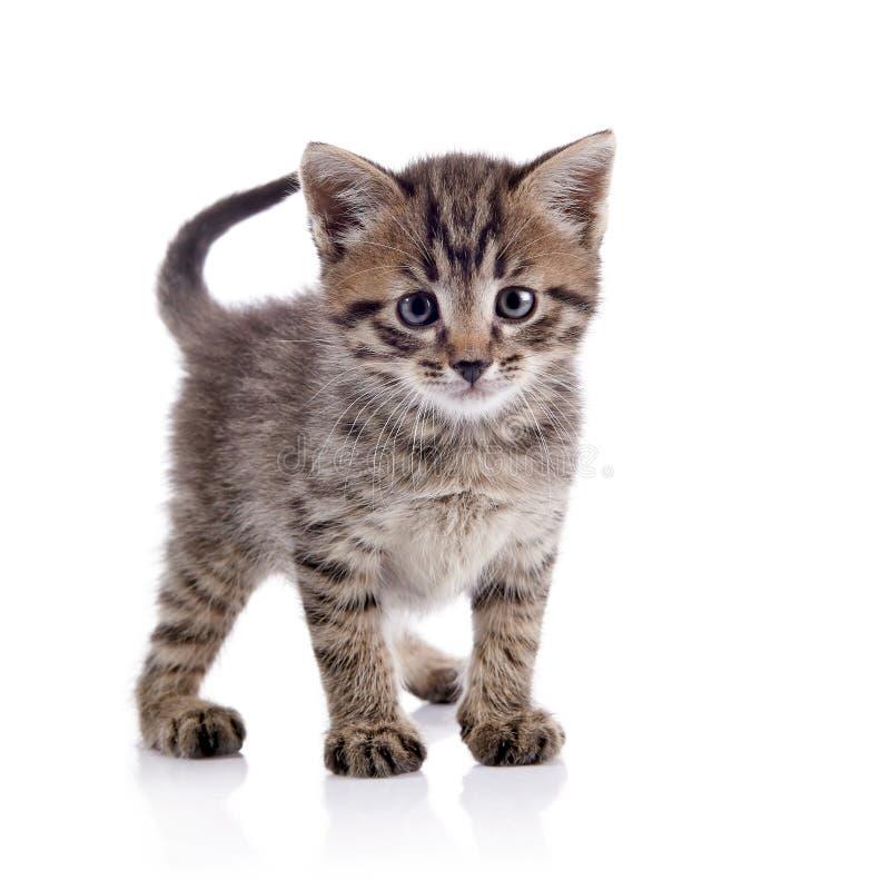 Das gestreifte Kätzchen stockfoto