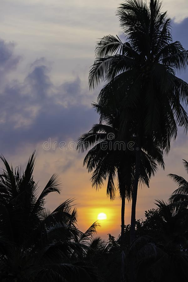 Das goldene Licht der Sonne und der Wolken im Himmel hinter den Kokosnussbäumen stockbilder