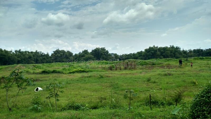 Das Grün der Natur Hintergrundnatur Schöner Himmel Das Grün der breiten Natur lizenzfreie stockfotos