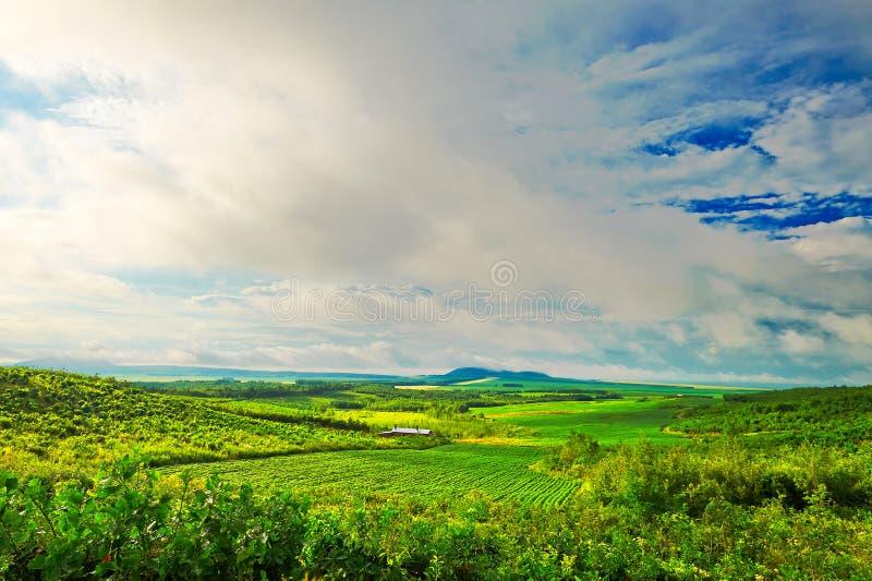 Das grüne Feld stockfoto