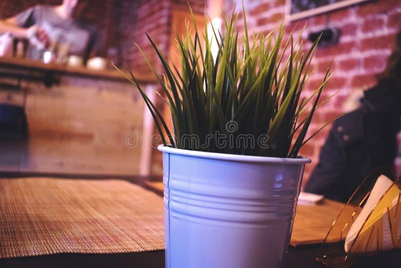 Das grüne Leben lizenzfreie stockfotos