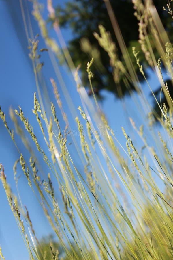 Das Gras auf dem Hintergrund stockbilder