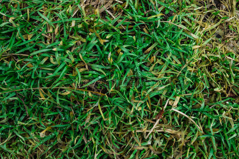 Das Gras im Wald stockbilder
