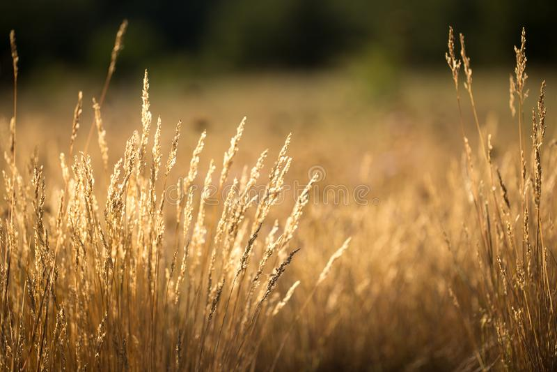 Das Gras ist trocken stockbilder