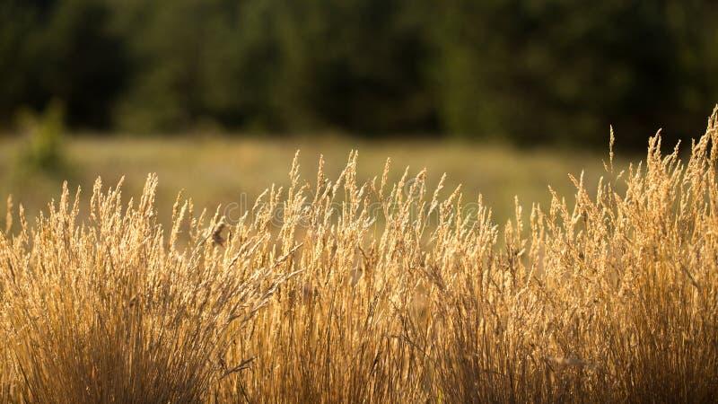 Das Gras ist trocken stockbild