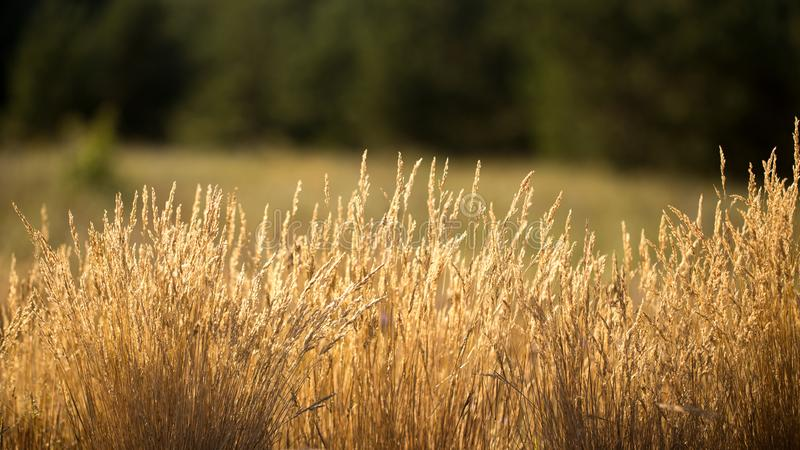 Das Gras ist trocken stockfoto