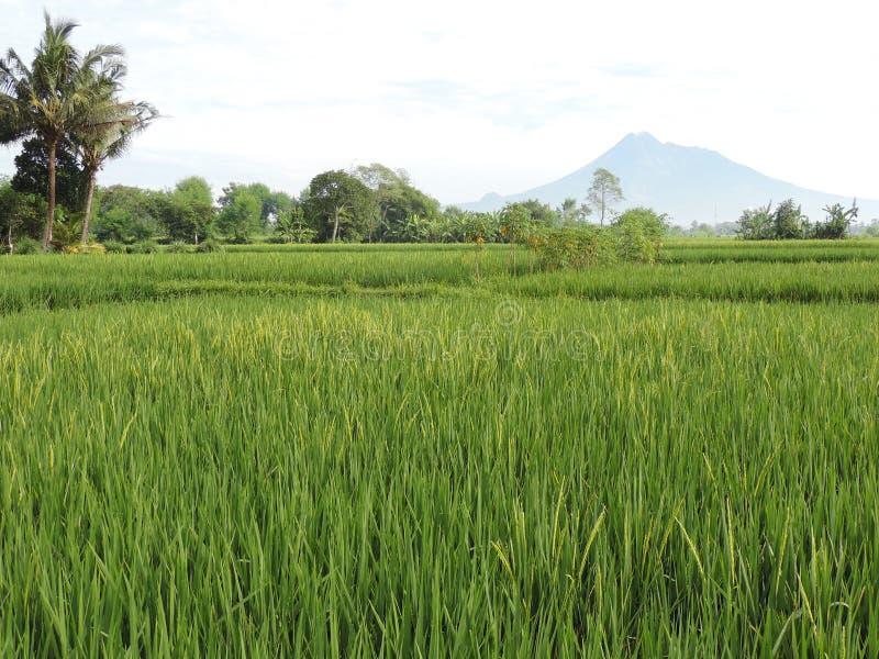 Das Gunung Merapi Indonesien am 9. März 2016 lizenzfreie stockbilder