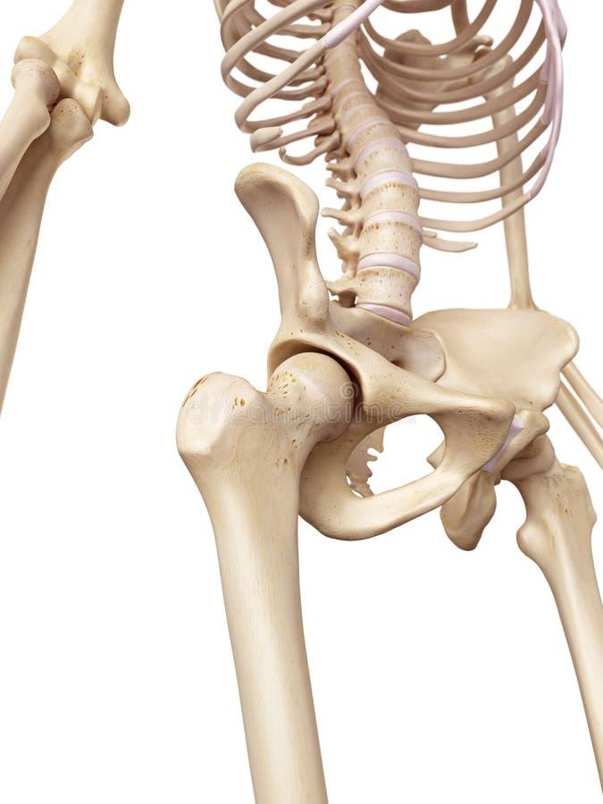 Nett Wo Ist Das Hüftgelenk Befindet Fotos - Menschliche Anatomie ...
