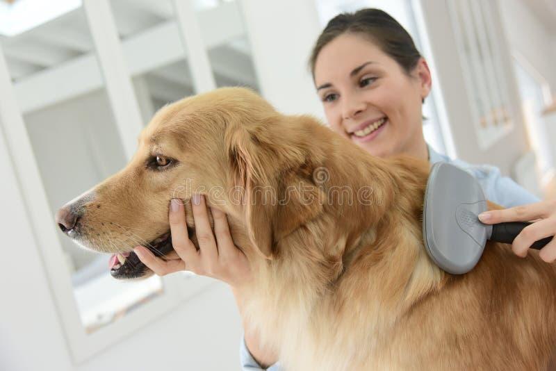 Das Haar des bürstenden Hundes der jungen Frau lizenzfreie stockfotos