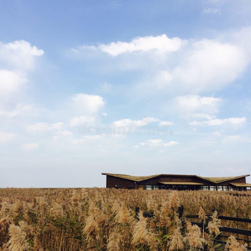 Das Haus in den Schilfen im Herbst lizenzfreies stockfoto