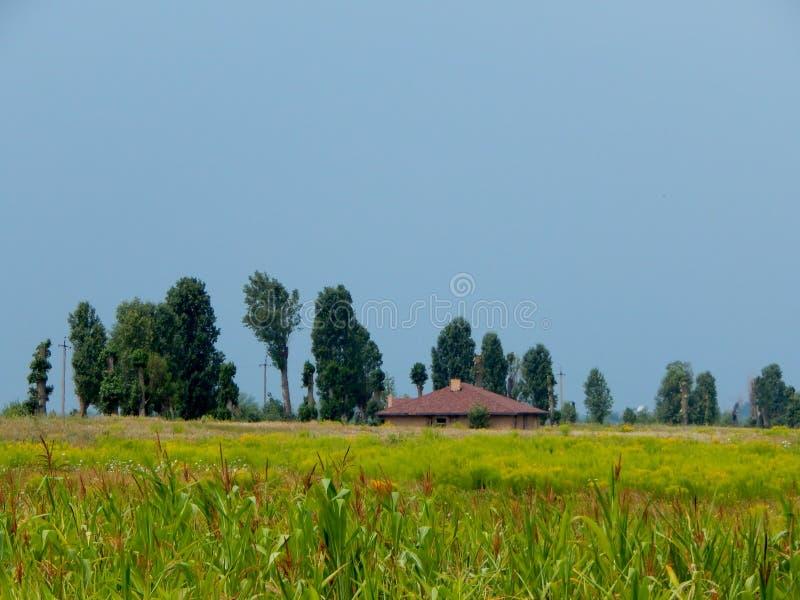 Das Haus wird in der üppigen Vegetation ertrunken lizenzfreies stockfoto
