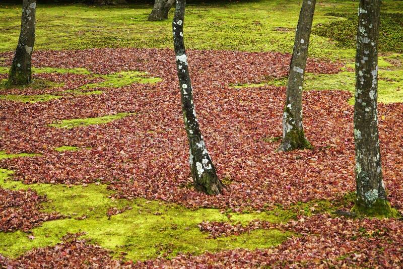 Das Herbstende aber der nette Winter wird gekommen stockfoto