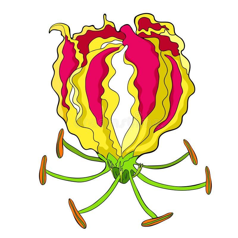 Das herrliche Rot Gloriosa-Blume Auch im corel abgehobenen Betrag stock abbildung