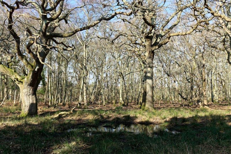 Das Holz bei Arne lizenzfreie stockfotos