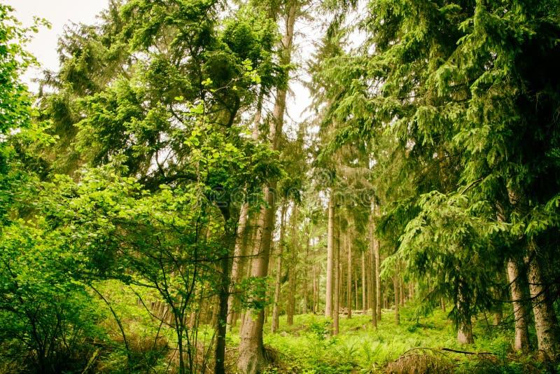 Das Holz Nationalparks Eifel in Nord-Rhein-Westphali Deutschland stockbild