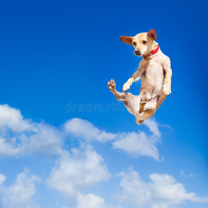 Das Hundespringen stockbild