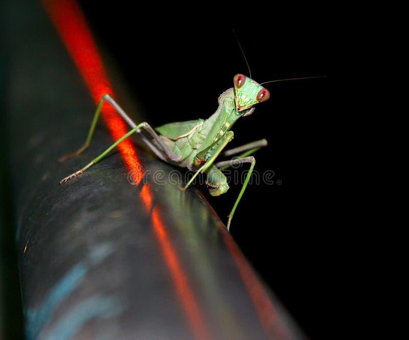 Das Insekt stockbilder